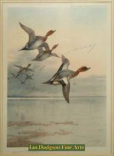 Wigeon over an estuary by Archibald Thorburn