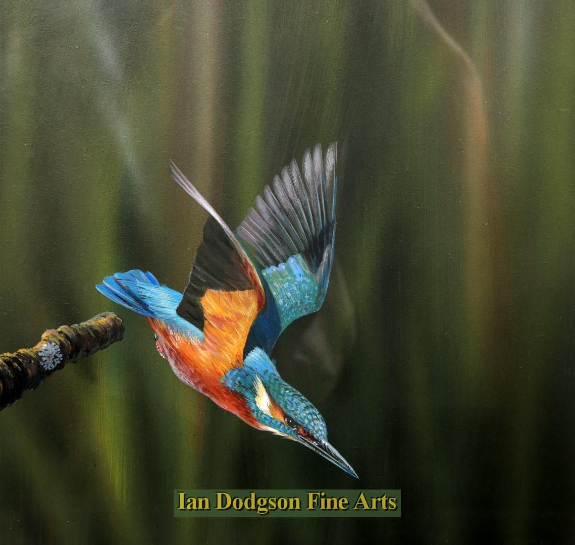 The Kingfisher by Richard Duffield