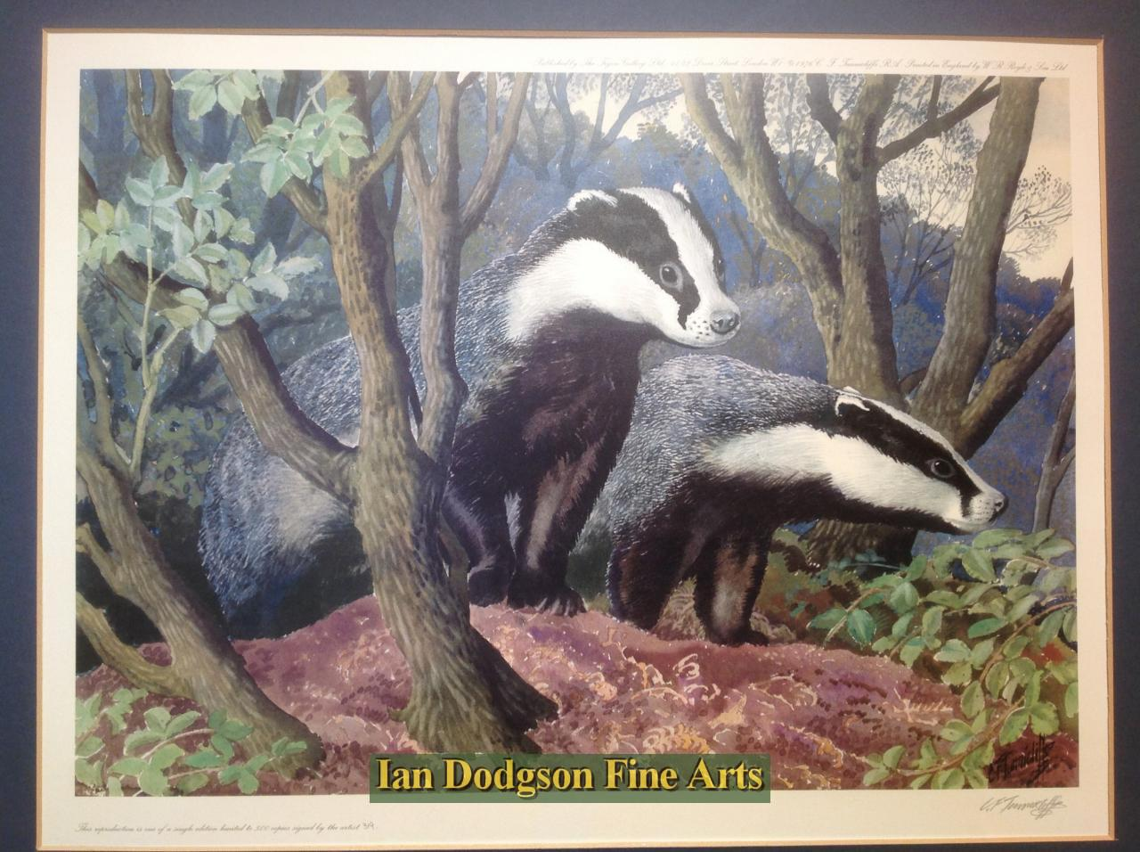 Badgers leaving the sett by Charles F Tunnicliffe